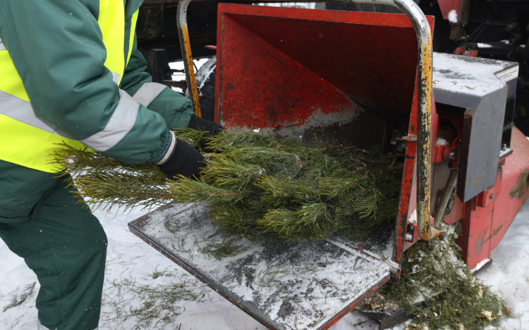 Kent County Locations to Recycle your Christmas Trees