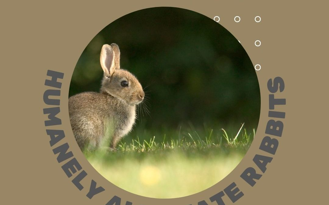 How to humanely alleviate Rabbits from your yard